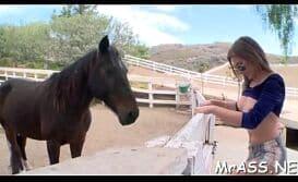 Cavalo comendo mulher