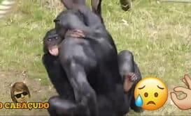 bunda de macaco